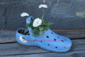 Croc with english daisy