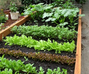 It's That Time Of Year To Start Planning Your Spring Garden