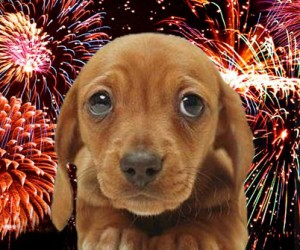 Fireworks and Animal Safety Tips